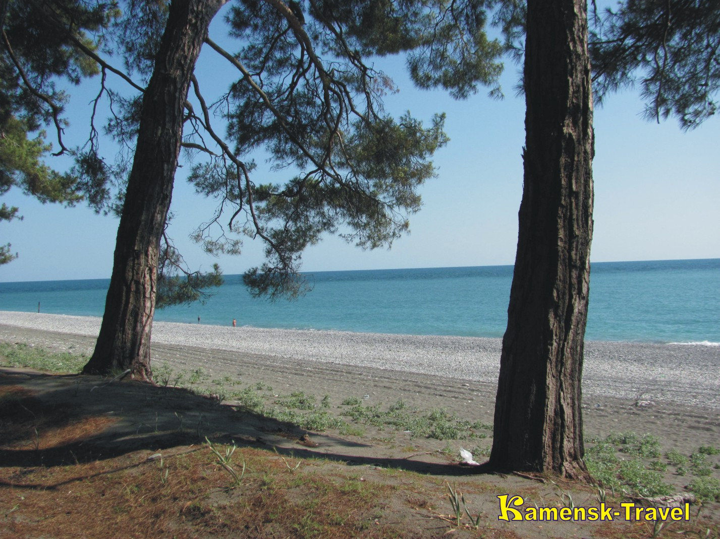 пицундский лес и море
